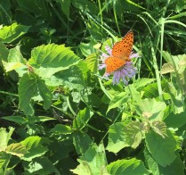Nature walk July 14 2018 - 6